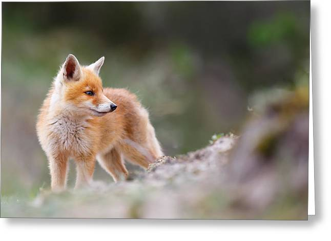 Cute Red Fox Greeting Card by Roeselien Raimond