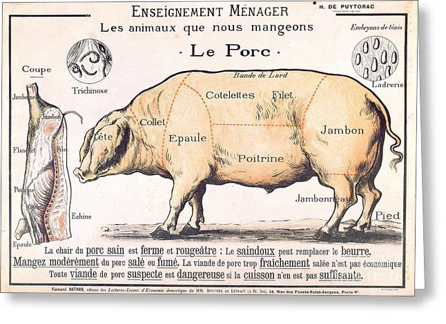 Kitchen Greeting Cards - Cuts of Pork Greeting Card by French School