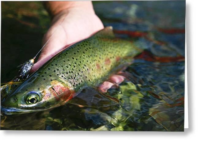 Cutthroat Greeting Cards - Cutthroat Trout On The Middle Fork Greeting Card by Drew Rush