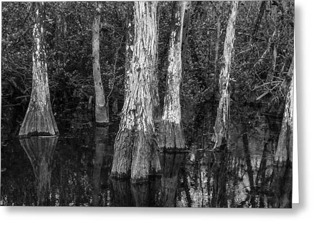 Everglades Greeting Cards - Cypress Elders Greeting Card by Jon Glaser
