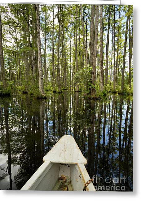 Cypress Trees Greeting Cards - Cypress Garden Swamp Greeting Card by Dustin K Ryan
