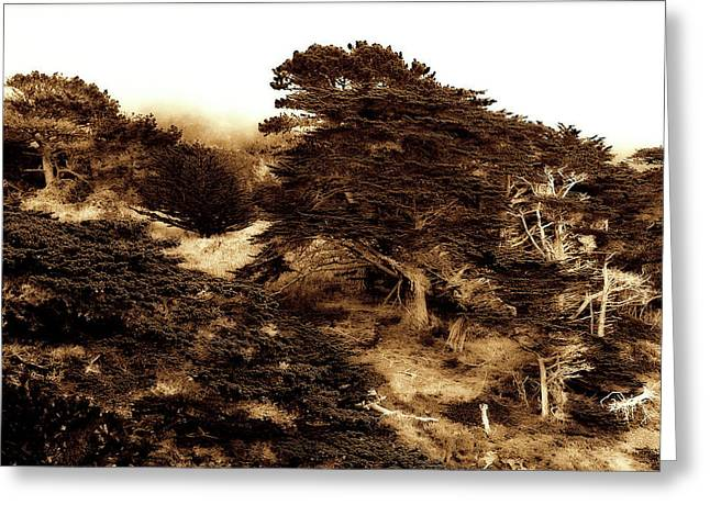 Point Lobos Greeting Cards - Cypress Grove 2 Greeting Card by Alan Hausenflock