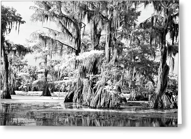 Alga Greeting Cards - Cypress Infrared Greeting Card by Lana Trussell