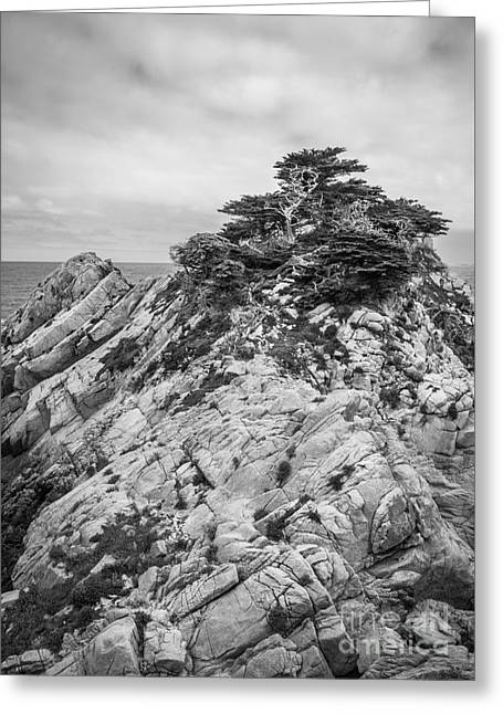 Point Lobos Reserve Greeting Cards - Cypress Island Greeting Card by Alexander Kunz