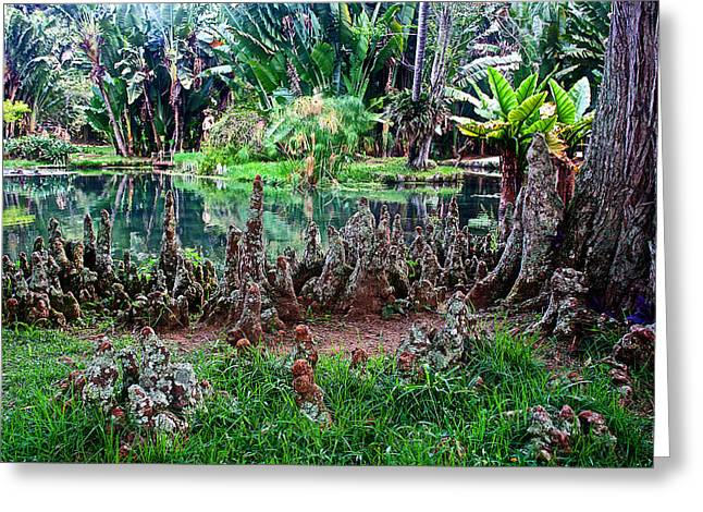 Cypress Knees Digital Art Greeting Cards - Cypress Knees in Botanical Garden of Rio de Janeiro-Brazil  Greeting Card by Ruth Hager