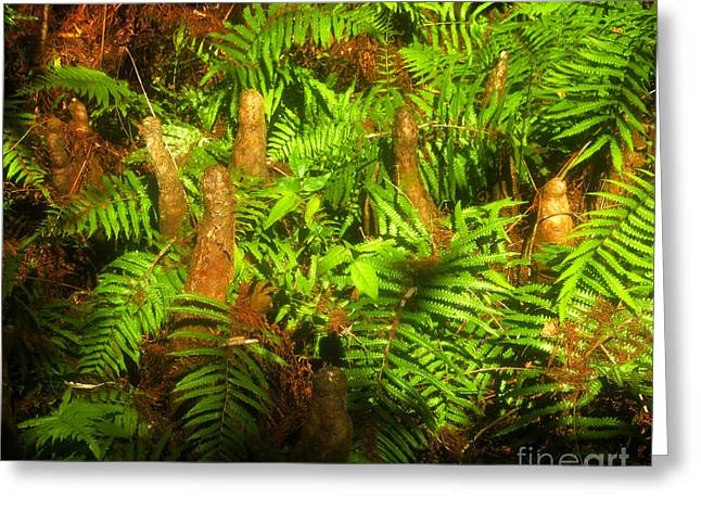 Bald Cypress Greeting Cards - Cypress knees in ferns Greeting Card by David Lee Thompson