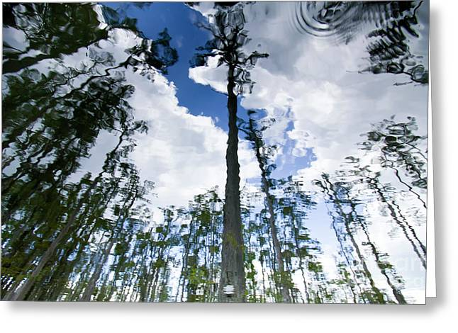 Cypress Trees Greeting Cards - Cypress Reflections Greeting Card by Dustin K Ryan