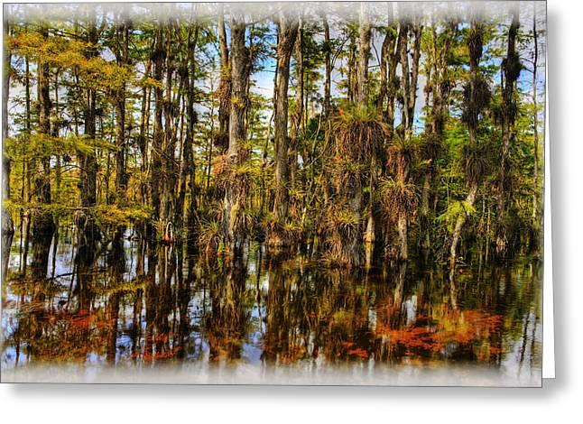Bromeliad Greeting Cards - Cypress Strand Everglades Greeting Card by Jim Dohms