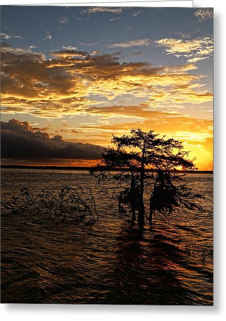 Toledo Bend Greeting Cards - Cypress Sunset Greeting Card by Judy Vincent