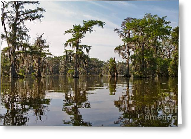 Cypress Trees and Spanish Moss in Lake Martin Greeting Card by Louise Heusinkveld