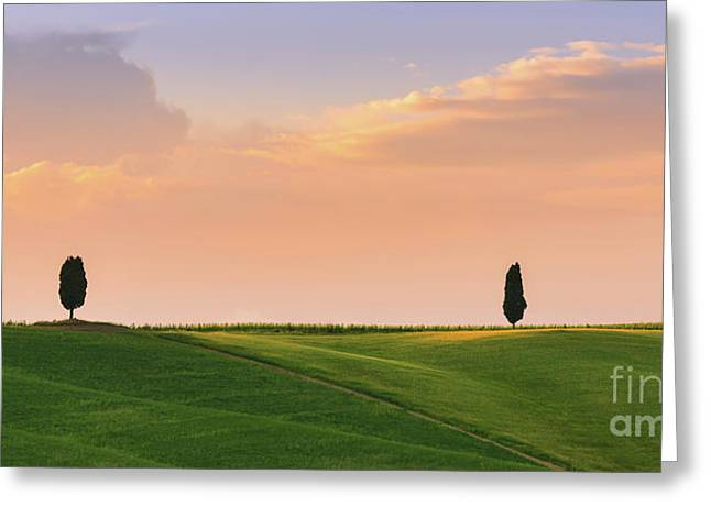 Cypress Trees At Sunset Greeting Card by Henk Meijer Photography
