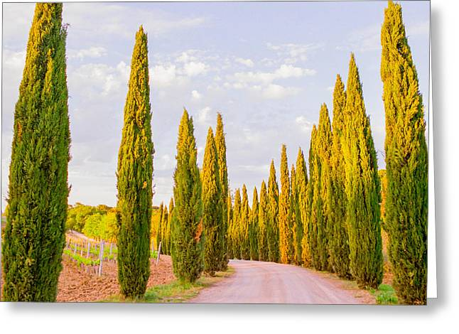 Cypress Trees In Tuscany Greeting Card by Ariane Moshayedi