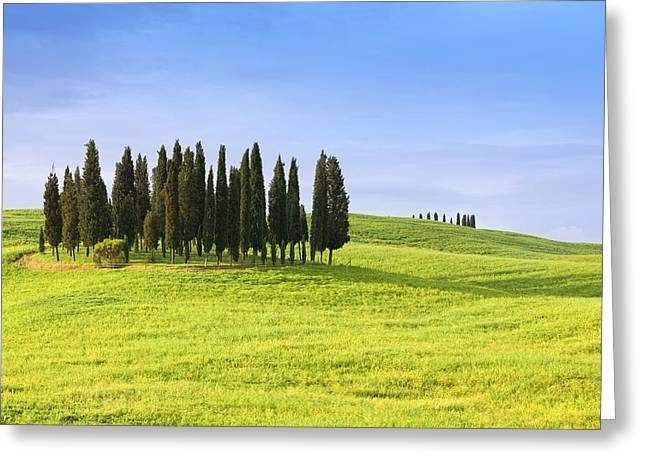 Roling Greeting Cards - cypress trees in Tuscany Italy Greeting Card by Ursula Alter