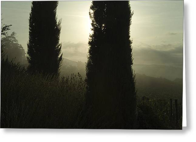 Chianti Hills Photographs Greeting Cards - Cypress Trees Looming In Front Greeting Card by Todd Gipstein