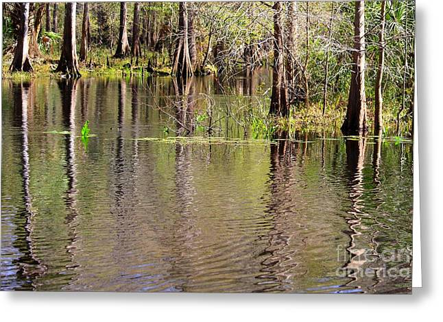 Reflection Of Trees In Water Greeting Cards - Cypresses Reflection Greeting Card by Carol Groenen