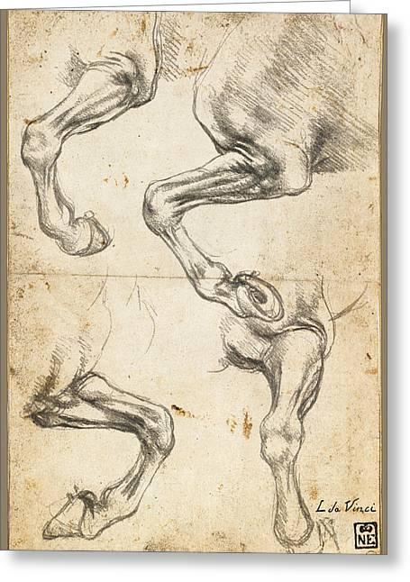 Da Vinci Horse Leg Study By Da Vinci Greeting Card by Tony Rubino