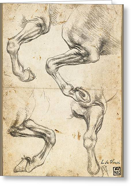 Interior Decorating Drawings Greeting Cards - Da Vinci Horse Leg Study By Da Vinci Greeting Card by Tony Rubino