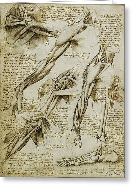 Interior Decorating Drawings Greeting Cards - Da Vinci Man Right Arm And Shoulder Anatomy By Da Vinci Greeting Card by Tony Rubino