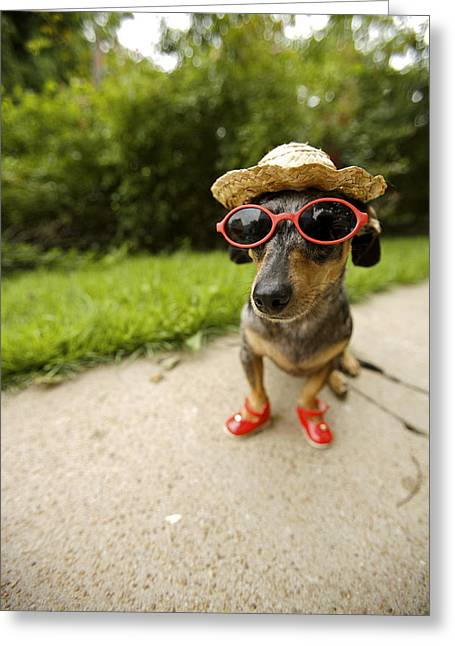 Dachshund In Sunglasses, Straw Hat Greeting Card by Gillham Studios