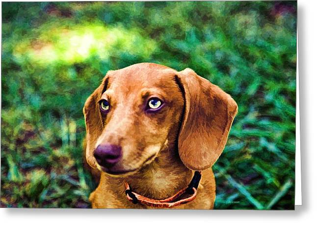 Puppies Photographs Greeting Cards - Dacshund pup Greeting Card by Dennis  Baswell
