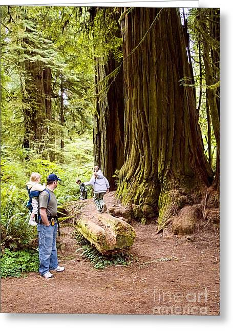 Family: Cupressaceae Greeting Cards - Dad and Children in Redwoods Greeting Card by Sherry  Curry