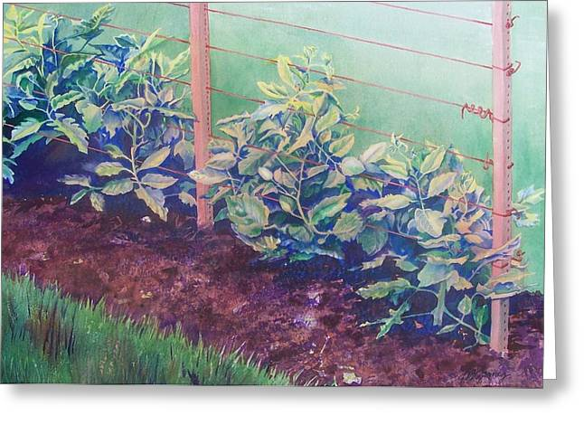 Green Beans Paintings Greeting Cards - Daddys Bean Row Greeting Card by Tina Farney