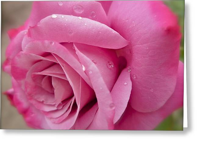 Daddy's Rose Greeting Card by Gwyn Newcombe
