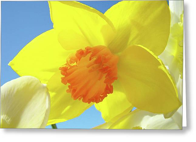 Daffodil Flowers Artwork 18 Spring Daffodils Art Prints Floral Artwork Greeting Card by Baslee Troutman
