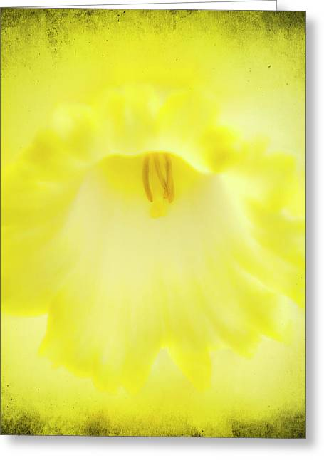 Flower Blooms Greeting Cards - Daffodils Are Yellow Greeting Card by Meirion Matthias