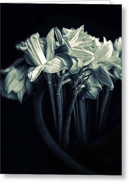 Duotone Greeting Cards - Daffodils Greeting Card by Jessica Jenney