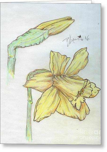 Daffodils Greeting Card by P J Lewis