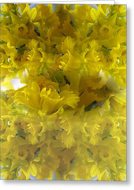 Springflowers Greeting Cards - Daffodils Spring 2015 Greeting Card by Tina M Wenger