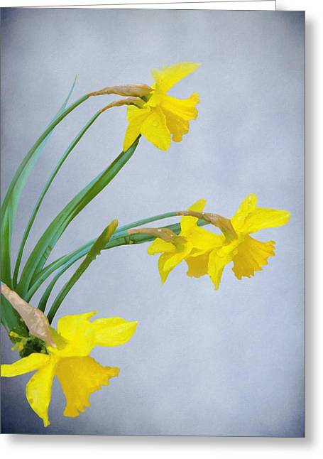 Spring Bulbs Greeting Cards - Daffodils with Raindrops Greeting Card by Diane Schuster