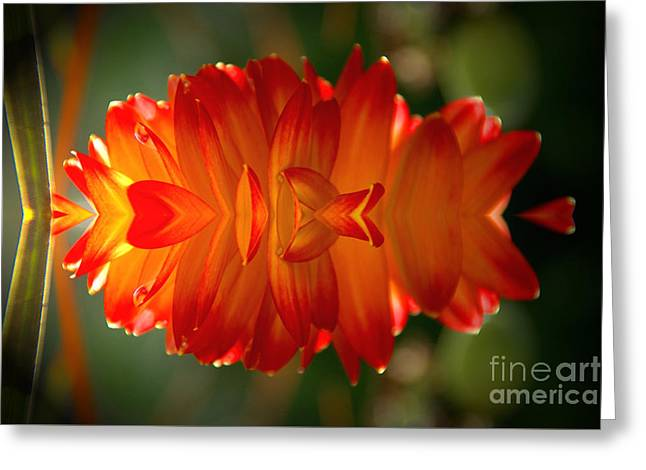 Botanical Greeting Cards - Dahlia Abstract 2 Greeting Card by Elmar Langle