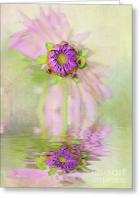 Dahlia Bud Reflection By Kaye Menner Greeting Card by Kaye Menner