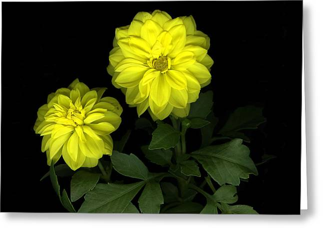 Dahlia Greeting Card by Christian Slanec