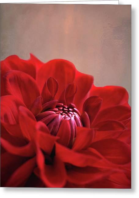 Dahlia Dalliance  Greeting Card by Marion Cullen
