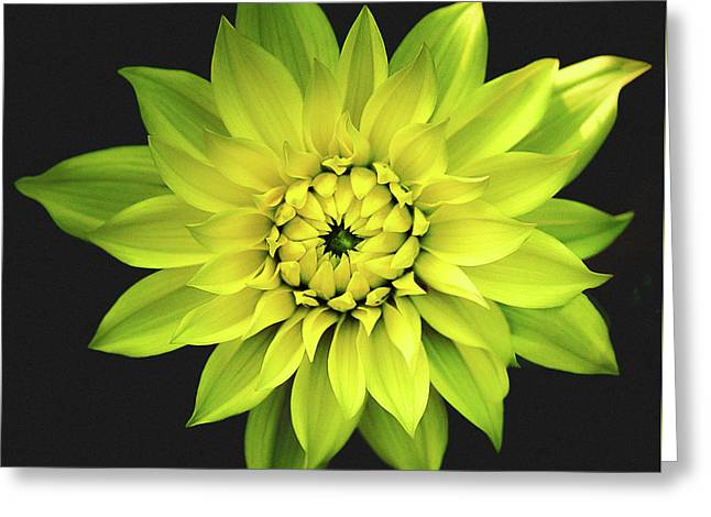 Dahlia In Yellow Greeting Card by Julie Palencia