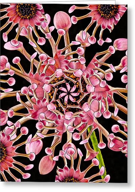 Dahlia Kaleidoscope By Jean Noren Greeting Card by Jean Noren