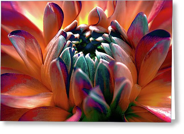 Dahlia Multi Colored Squared Greeting Card by Julie Palencia