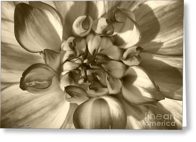 Jem Fine Arts Greeting Cards - Dahlia named Who Dun It Greeting Card by J McCombie
