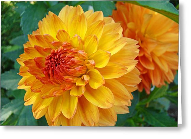 Baslee Troutman Greeting Cards - DAHLIAS Art Prints Orange DAHLIA FLOWERS Baslee Troutman Greeting Card by Baslee Troutman
