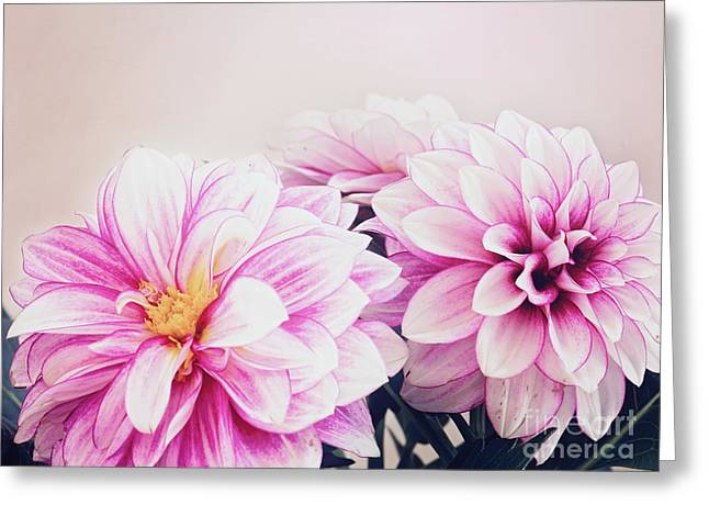 Photo Art Gallery Greeting Cards - Dahlias Greeting Card by Gwen Gibson