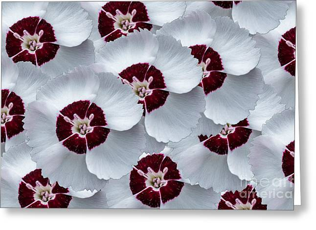 Flower Blossom Greeting Cards - Dainty Dame Mix Greeting Card by Steve Purnell