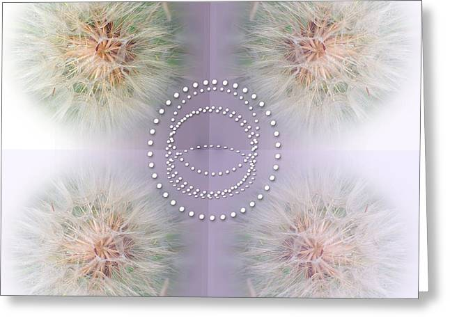 Abstract Digital Photographs Greeting Cards - Dainty Dandelions Collage Greeting Card by Tina M Wenger