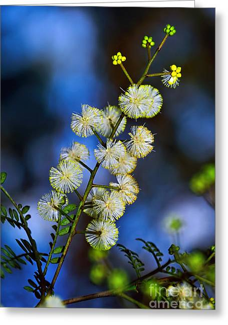 Yellow Stamen Greeting Cards - Dainty Wildflowers on Blue Bokeh by Kaye Menner Greeting Card by Kaye Menner