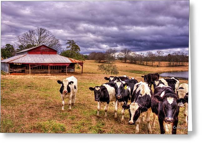Dairy Heifer Groupies The Red Barn Greeting Card by Reid Callaway