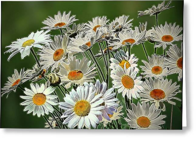 Coloured Greeting Cards - Daisies Greeting Card by Alexey Bazhan