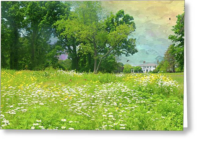 Daisies At Crawford Greeting Card by Diana Angstadt