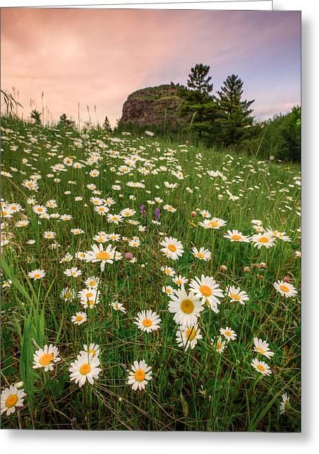 Geology Photographs Greeting Cards - Daisies at Mt McKay Greeting Card by Jakub Sisak